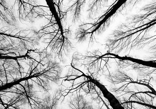alberi-1680x840_mini